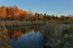 Озеро в парке Победы Омск