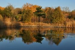 И над озером летают утки...