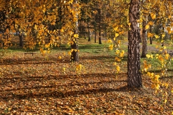 Осень, осень...