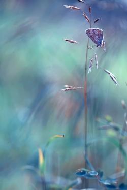 Акварель лета