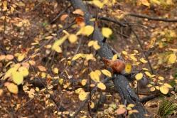 В осенней листве