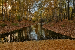 Лесное озеро, Горьковский район, Омская область