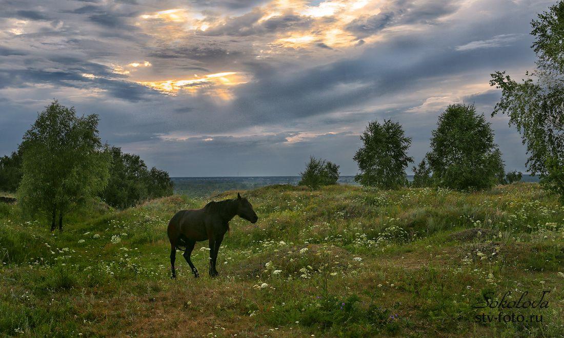 На лугу пасутся кони...